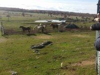Equinos tras la valla