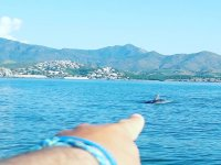 A dolphin passing next to us