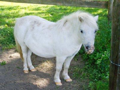 Giro in pony di 30 minuti a Fontanar