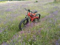 Fat bike entre flores silvestres