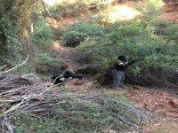 Ocupando puestros tras los arbustos