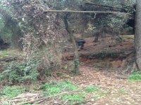 Internandose en el bosque con el arma simulada
