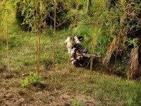 Oculto en el bosque vietnamita