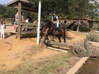 Salto de valla a caballo