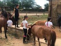 Cuidando de los caballos