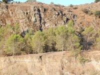Arboles enraizados en la roca