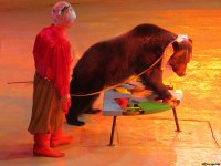 Bear in the circus show
