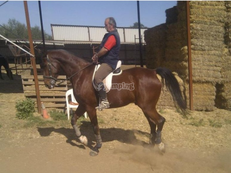 Expert instructors in horse riding