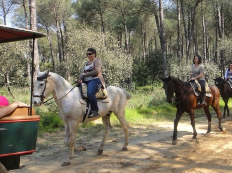 Riding tour in the pine forest