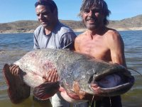 Two fishermen with a great catfish