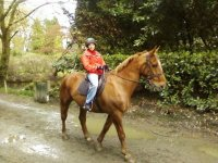 马匹在雪地上骑马在塔拉戈纳