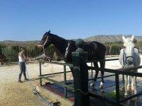 preparare i cavalli