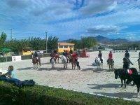 attività con i cavalli