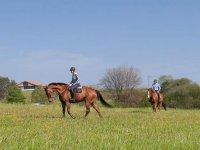 Passeggiate a cavallo attraverso i prati