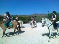 passeggiate con i cavalli e i pony