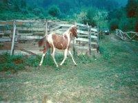 Abbiamo cavalli in semi-libertà