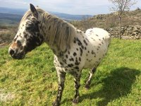 Beautiful spotted horse