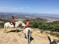 About the horses in the mountains