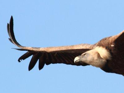 PisaValles Ornitología
