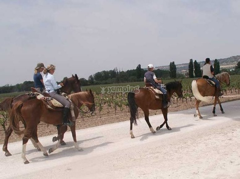 Get to know the riverbank of the Duero on a horse