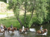 nuestros caballos no le temen a nada