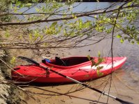 Canoe among the branches
