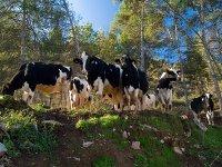 Visita a las vacas