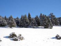 Lles de Cerdanya站--999- Lleida的雪--999-雪中的道路