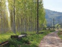 Camino paralelo a los arboles