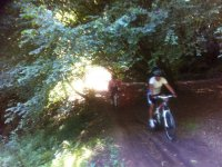 Cycling under the trees