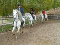 Three horses on the track
