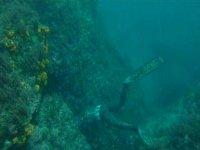 Pratique de la plongée en apnée