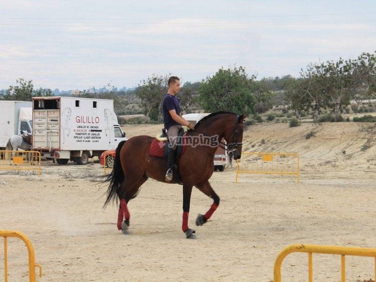 Classe di equitazione