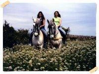 Clase de equitación en grupo