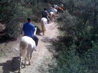 en los caballos