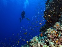独立潜水探索海底世界