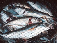 Variedad de peces
