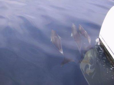 Fly Blue Cruceros Avistamiento de Cetáceos