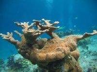 与海底珊瑚标志CBZ教练沟通