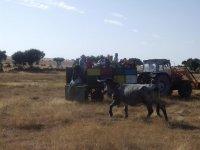 Alimentando al ganado desde el remolque