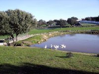 Pond of ducks