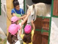 Stroking the white horse