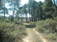 Pineda route in mountain bike