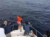 Asomados por proa viendo delfines