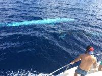 Cetaceo en paralelo al barco