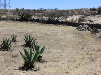 Ganaderia Cayo Berges Despedidas de Soltero