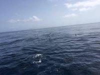 Avvicinamento ai delfini