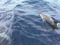 Delfini che nuotano vicino alla barca