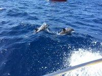 Delfini che escono dall'acqua
