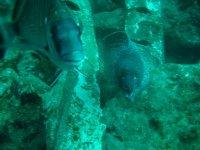 Habitantes de las profundidades